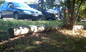 Maleza e escombros compiten por un espazo no paseo. Foto: Favec