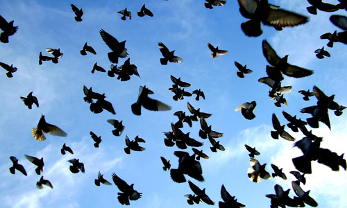 Las palomas se quedan con tu jeta