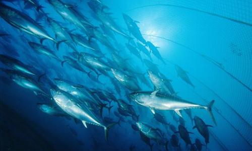 La Galicia pesquera en Europa