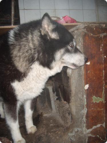 17 perros muertos al prender fuego a una protectora en Ferrol