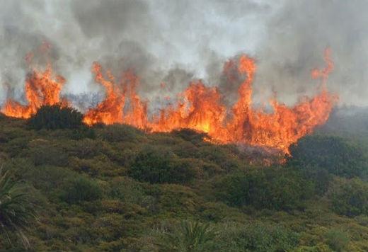 Detenido un vecino de Salvaterra por 10 incendios forestales