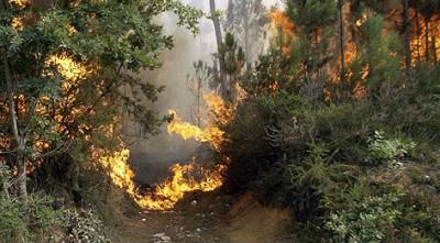 Ya van 270 hectáreas quemadas por los incendios forestales en Ourense