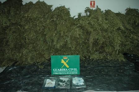 Descubren más de 1.300 kilos de marihuana en Piñor y Vilamarín (Ourense)