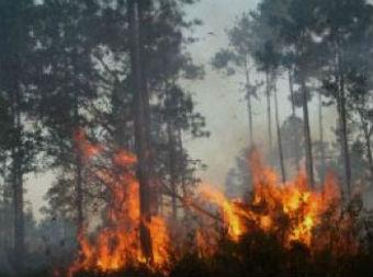 Outro incendio de consideración entre Pontedeume e Vilarmaior, preto das Fragas do Eume