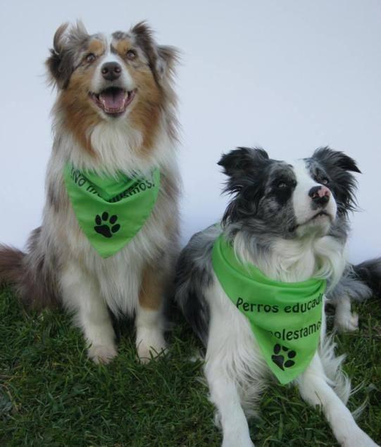 Este sábado, flashmobs a nivel nacional con protagonistas caninos