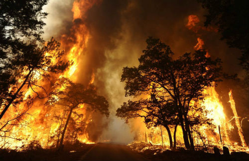 En Galicia, más de 180 detenciones e imputaciones por incendios forestales en 2013
