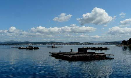 La marea roja se retira y se abren las bateas en las rías de Arousa, Pontevedra y Vigo