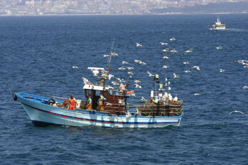 A couta de sardiña para o 'cerco galego' será de 3.000 quilos por barco á semana