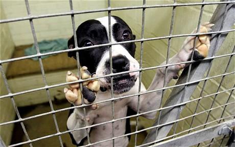 Libera! inicia unha recollida de sinaturas para prohibir o sacrificio de animais domésticos