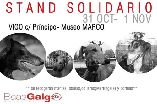 Galgos, este fin de semana en el centro de Vigo