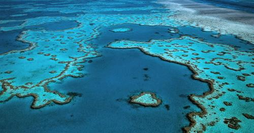 Los corales de la Gran Barrera se mueren