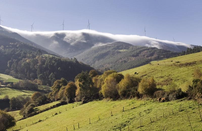 Descobren un novo fungo na Reserva da Biosfera Terras do Miño, en Lugo