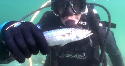 Un buzo vigués capta imágenes de miles de peces muertos en el fondo marino de Toralla