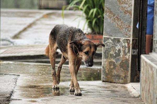 En Galicia se multará con 5.000€ el llevarse un perro abandonado a casa pero estarán permitidas las corridas de toros