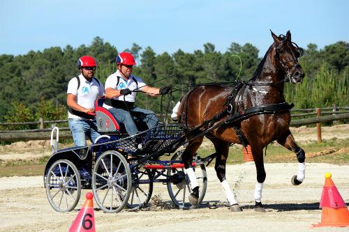 Cuarta proba da 'Copa de Galicia' de enganche de carruaxes de cabalos, esta fin de semana en Nigrán