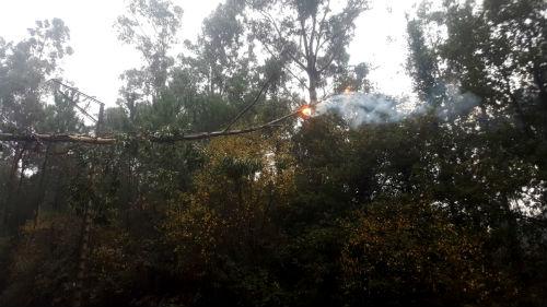 Caída de ramas, cortes de electricidad y el desvío de tráfico en la PO-331 en Mos, primeros efectos de la borrasca 'Ana'