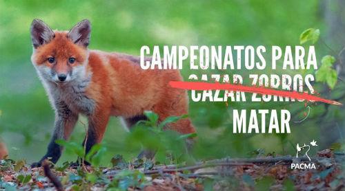 160 cazadores se concentrarán este sábado en Dozón para matar zorros