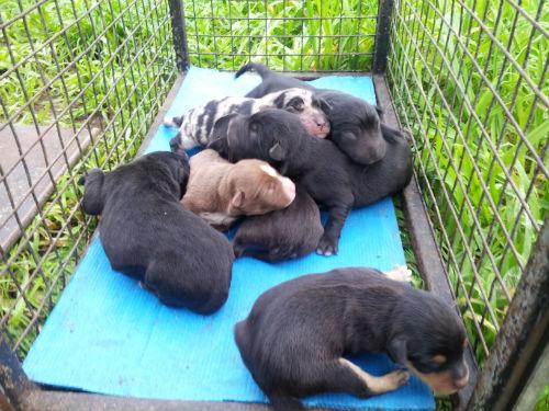 Denunciado en el juzgado un sujeto que abandonó 7 cachorros en un contenedor de Beade