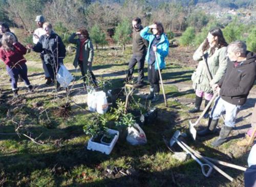 'Colectivo Rexeneración Autóctona Val Miñor' planta máis de cen árbores nos montes de Couso, nas ladeiras do Monte do Facho