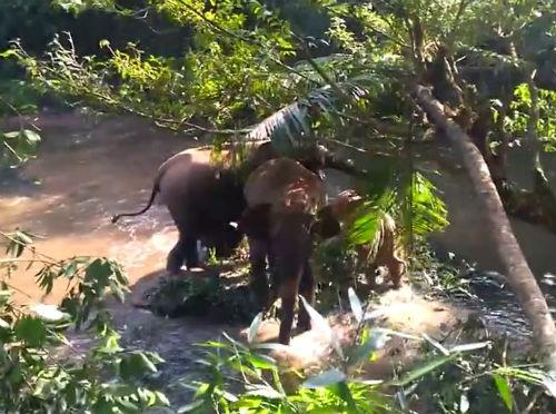 Un elefante agradece a un grupo de hombres el rescate de una cría que se había quedado atrapada en el barro