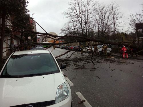 Un árbol cae sobre la calzada, en Ramón Nieto, corta el tráfico y causa daños a un coche