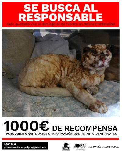 Ofrecen 1.000€ de recompensa por quien ofrezca datos sobre el sujeto que quemó vivo a un gato en Baiona