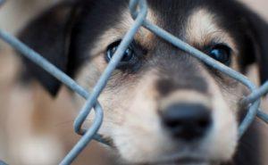 @LiberaONG y Fundación Franz Weber instan al Concello a elaborar una nueva Ordenanza de Protección Animal
