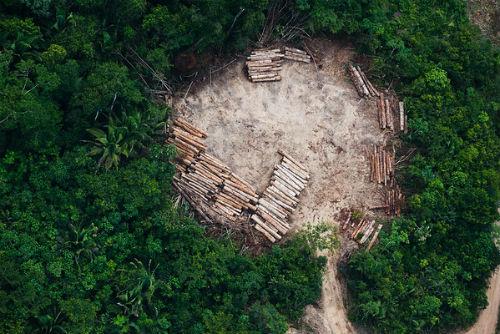 """@greenpeace_esp denuncia la """"desidia de la Xunta para investigar la entrada de madera de sangre"""" en Galicia"""