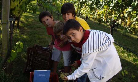 Los pequeños echaron una mano en la vendimia en finca 'Catuxa'.