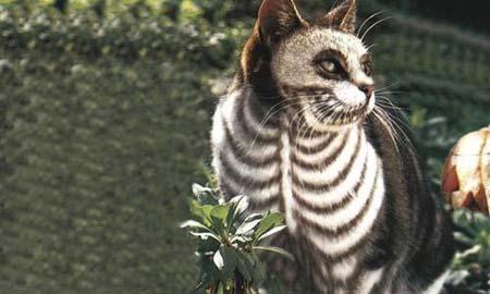 Gato cadáver. Fuente: pictureisunrelated.com