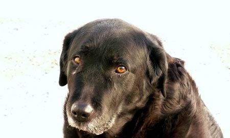 O Jaticán ha dado en adopción a cientos de perros