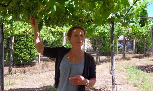 """La enóloga Josephine Perry con sus """"hijos"""", las uvas que dan el Nora da Neve."""