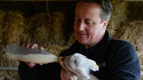El primer ministro David Cameros en una granja en Witney, su circunscripción electoral, en el condado de Oxfordshire -al sur de Inglaterra-.