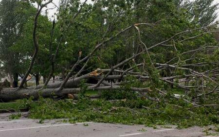 Un árbol ha cortado el tráfico en la PO-551, a la entrada de Mos/ Fotografía: B.M.