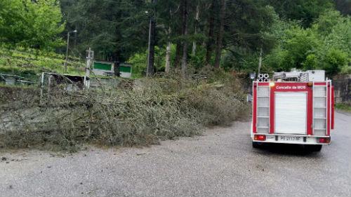 Los Bomberos de Mos han tenido que acudir tras la caída de ramas y varios árboles/Fotografía: F.C.