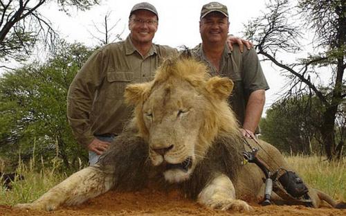 El imbécil que mató al león, con gafas, es el dentista estadounidense Walter James Palmer