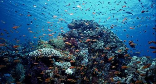 ecosistemas-marinos