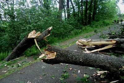 temporal-árbol-caído