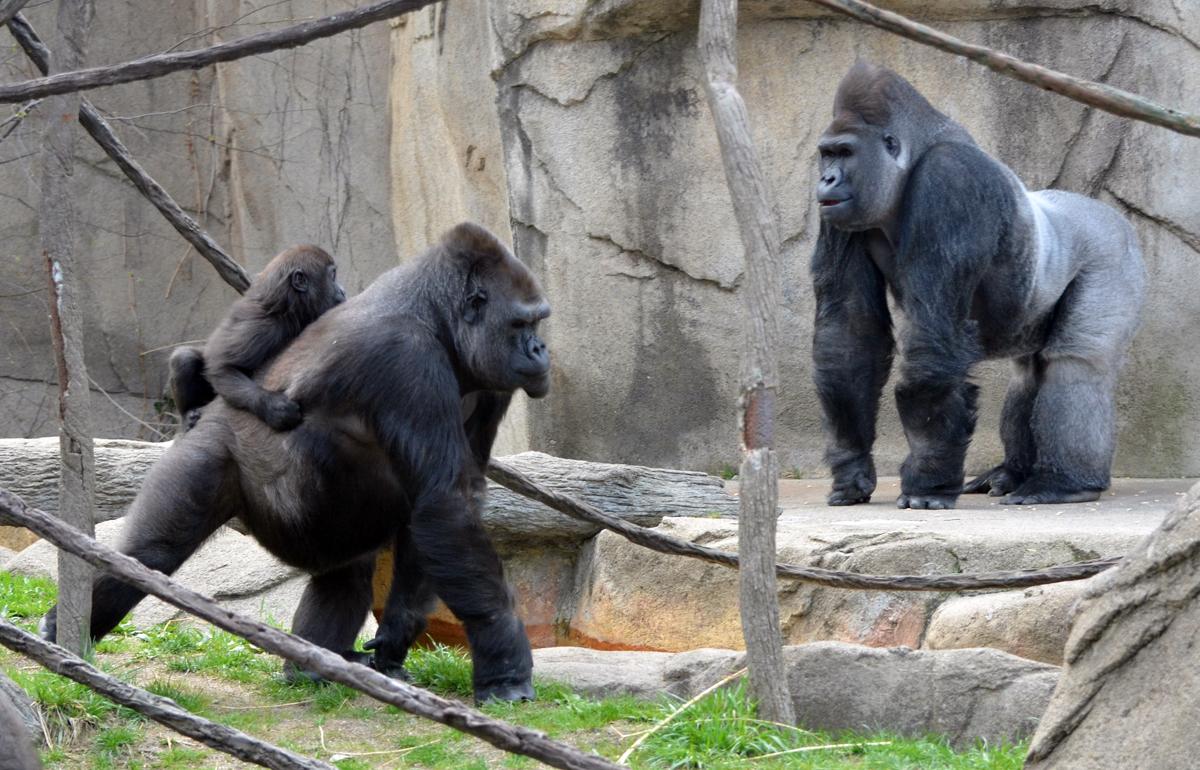 cincinati zoo