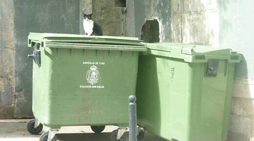 gato-contenedor-01