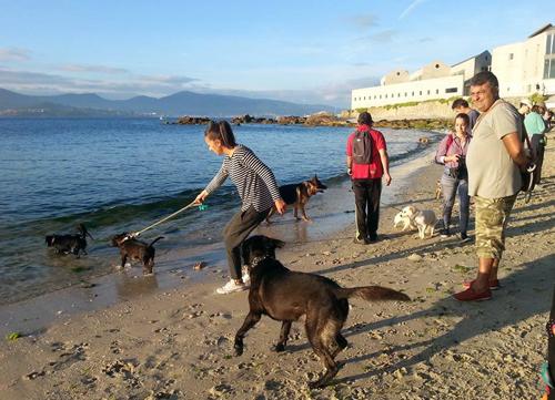 playa canina2