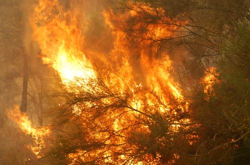 Extinguido o incendio de Salvaterra tras queimar 352 hectáreas