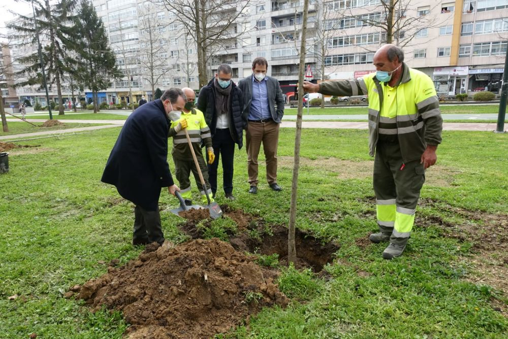 Alcalde de Vigo plantando un árbol