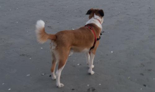 A Calzoa praia para cans