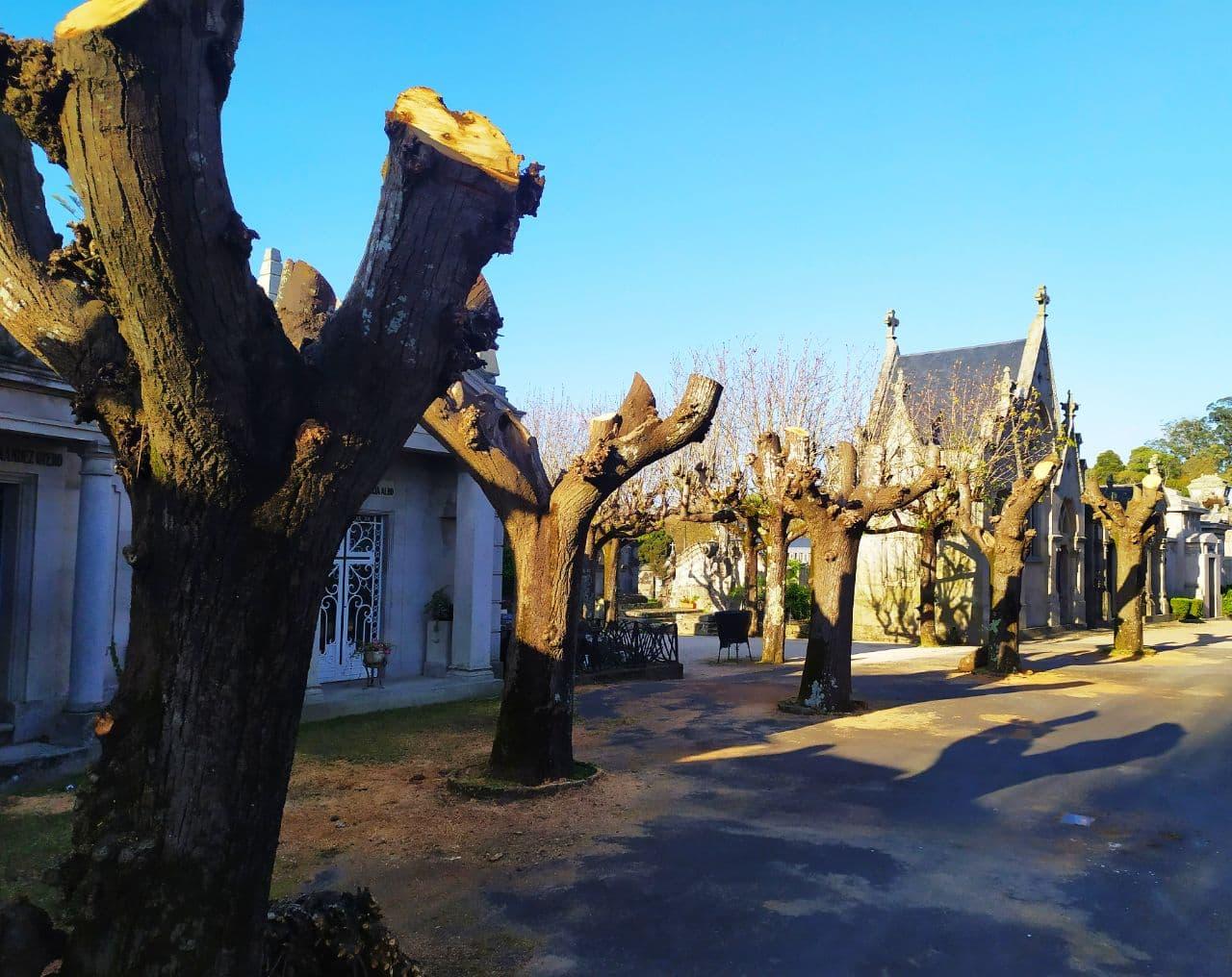 Árboles talados de manera salvaje en Pereiró