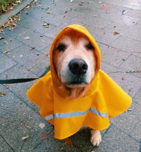 Llueve en Vigo