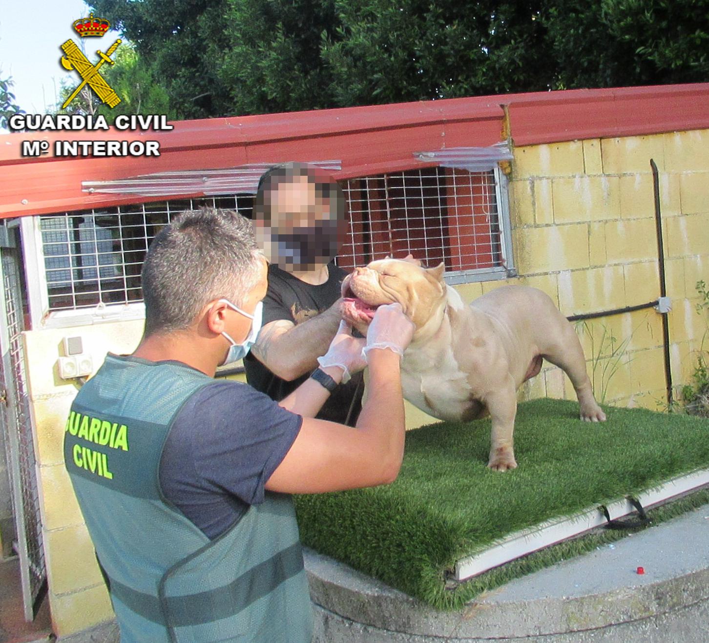 La Guardia Civil recupera en Vigo dos perros robados en Sanxenxo