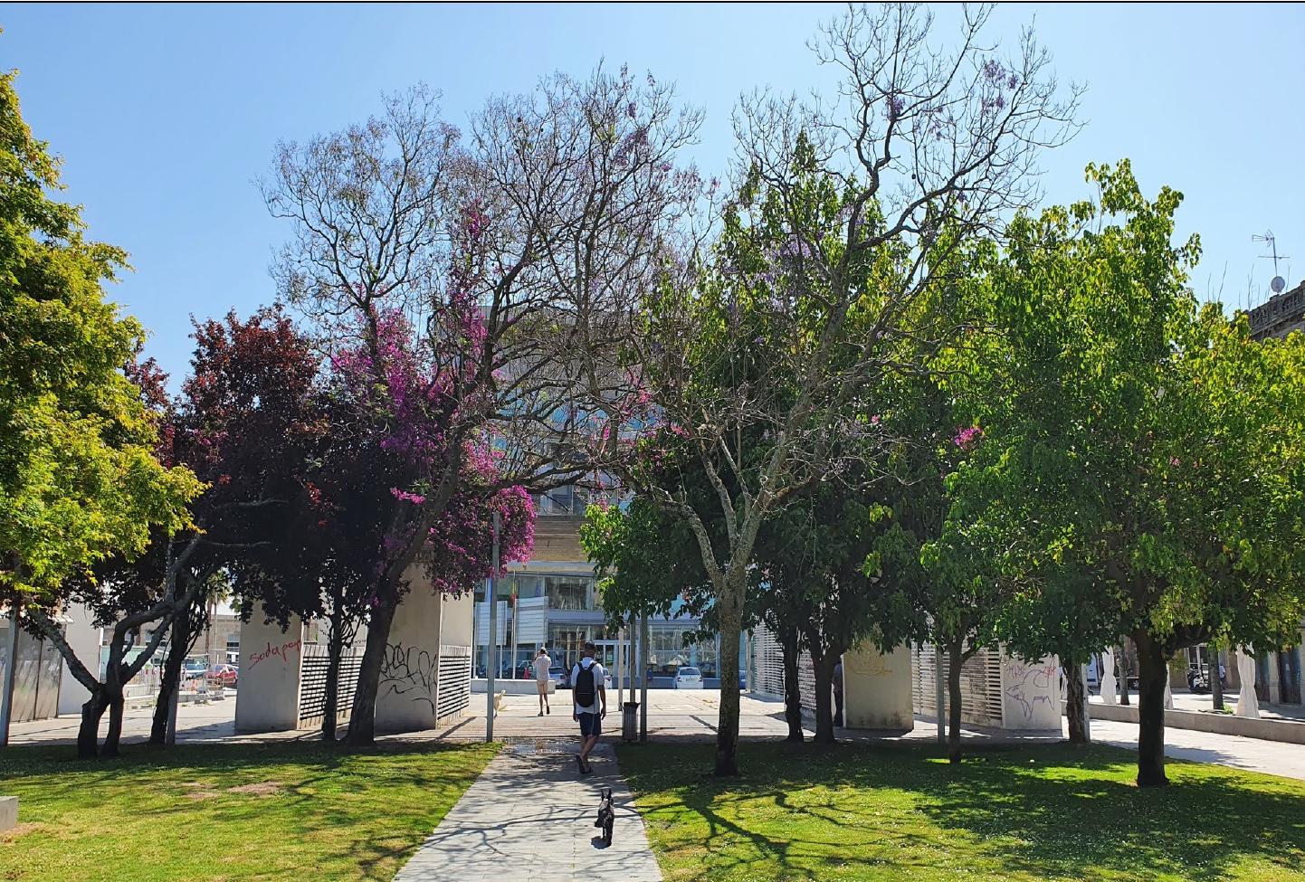 El Puerto talará varios árboles en Bouzas, Praza da Estrela y jardines de Elduayen